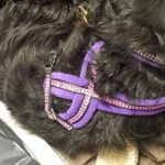 Sparkles Standard Fleece Leads-348